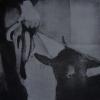 01_mouton_2_60x60cm_2011